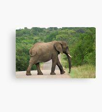 Elephant Walking - WildAfrika Canvas Print