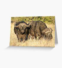 Cape Buffaloes 2 - WildAfrika Greeting Card