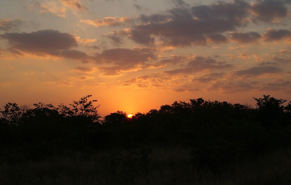 South Africa Sunset - Wild Afrika by WildAfrika