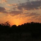 South Africa Sunset - Wild Afrika by WildAfrika