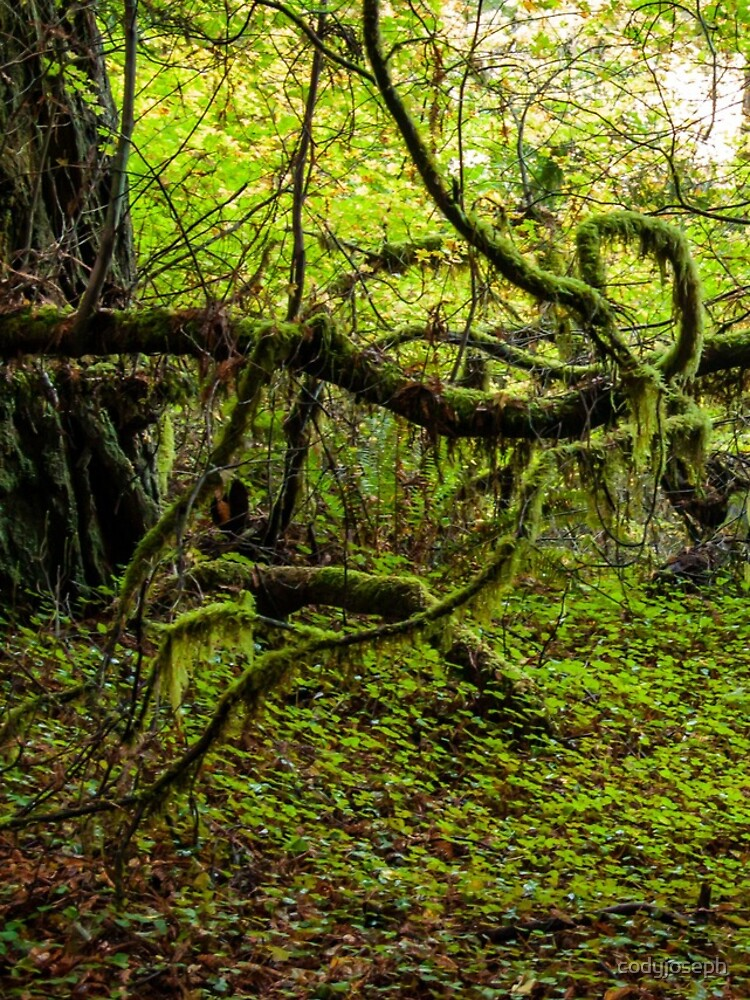 Mossy Forest by codyjoseph