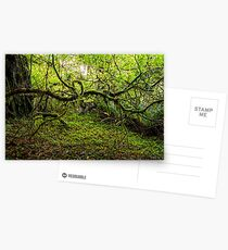 Mossy Forest Postcards