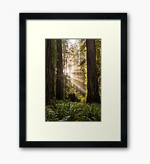 Forest Sunrays Framed Print