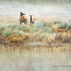 foggy meadow elk by R Christopher  Vest