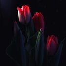 Tulips for My Tulip by Yuliya Art