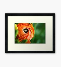 Orange....... Framed Print