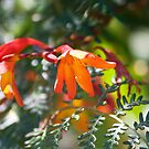 Colours of Summer I - Hot Orange & Cool Green by TomRaven