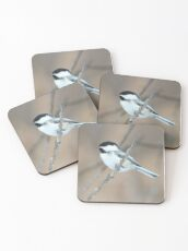 Black-capped Chickadee in Spring Coasters