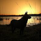 Sunset with my dog by ienemien