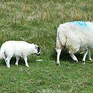 Ewe and Lamb von BlueMoonRose