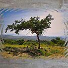 The Gathering Tree by KateMcCSeattle
