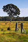 Grazing land near the Grampians by Darren Stones
