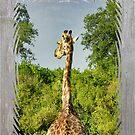 A giraffe shall lead us... by KateMcCSeattle
