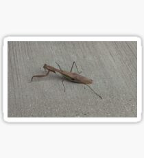Praying Mantis Cute Insects Sticker