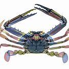 CRAB by Paul CESSFORD