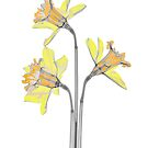 Colourful dafodil flowers by Paul CESSFORD