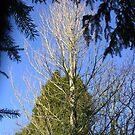 Devon Garden Trees by lezvee