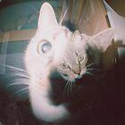 cat nip by tomzrad