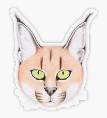 African Caracal Cat Transparent Sticker