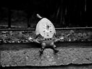 Humpty Dumpty by Ryan Davison Crisp