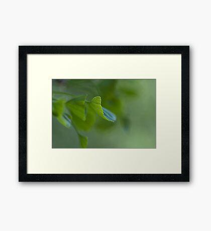 Vriditas Framed Print