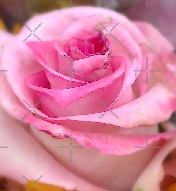 Pink Rose Macro  by Lisa Pearlman