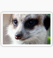 Meerkat 2 Sticker