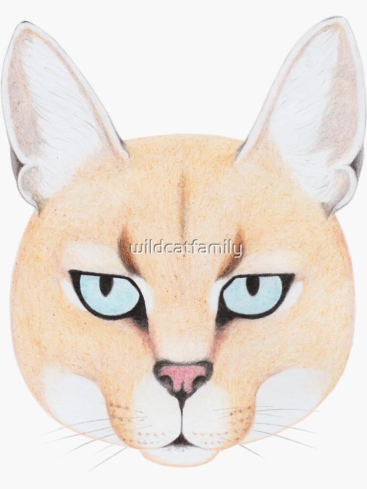 African Golden Cat by wildcatfamily