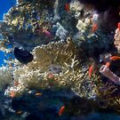Mysterious And Beautiful Red Sea Underwater World by hurmerinta