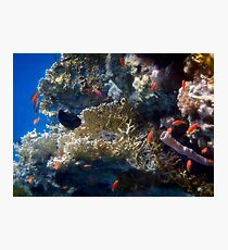 Mysterious And Beautiful Red Sea Underwater World Photographic Print