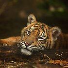 Baby Tiger: Model II by Daniela Pintimalli