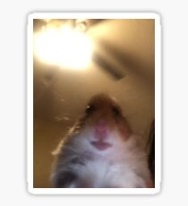 Hamster Staring at Phone Sticker