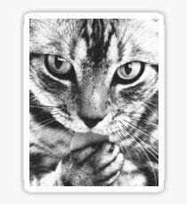 Mischievous Cat Sticker