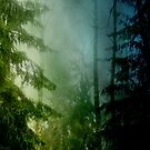 Blue pines by armine12n