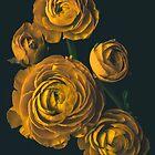 Ranunculus by alan shapiro