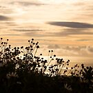 Madeira sunrise by armine12n