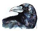 Raven by Kendra Shedenhelm