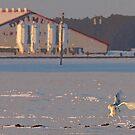 The Landing of the White Snowy Angel by DigitallyStill