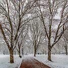 Winter at Boston Common by LudaNayvelt