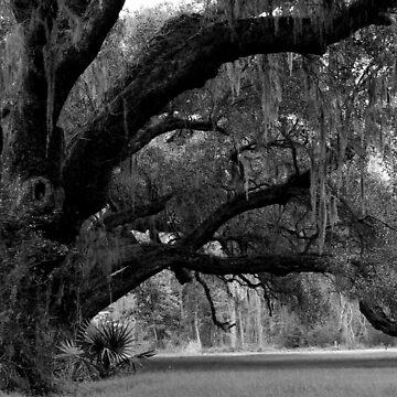 Stately Oaks by suddath