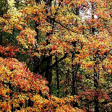 Fall Color II by suddath