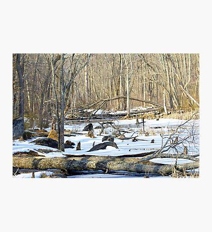 The Winter Swamp Photographic Print
