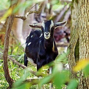Smiling Goat by FrankieCat