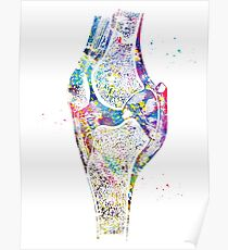 Knee bone Poster