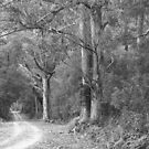 Montagu Lane...#5 by phillip wise