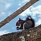 Enjoying a Nut by FrankieCat