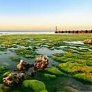 Green Shore, Beeston Regis, North Norfolk Coast by Simon Bowen