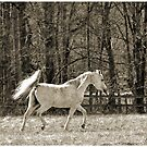 The White Horse by Jeff Ore