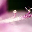 Tiny Crystals by Kym Howard