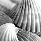 Sea Shells I B & W by Kathie Nichols